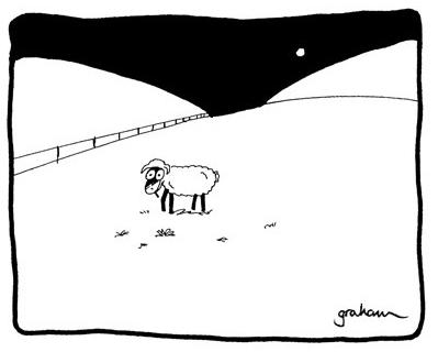 Sheep alone awake in a field at night.